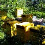 Bienenkästen von hinten